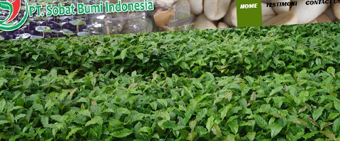 Jasa Pembuatan Website Bandung Murah  Jasa pembuatan website murah Bandung Company Profile PT SBI