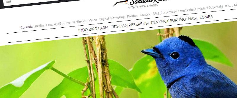 Jasa Pembuatan Website Bandung Murah sahabatkicau.com Jasa pembuatan website murah Bandung Berita sahabatkicau.com